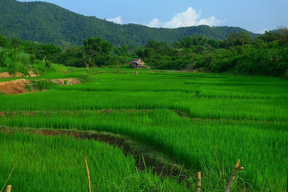 LaosVo : des vacances réussies grâce à cette agence de voyages